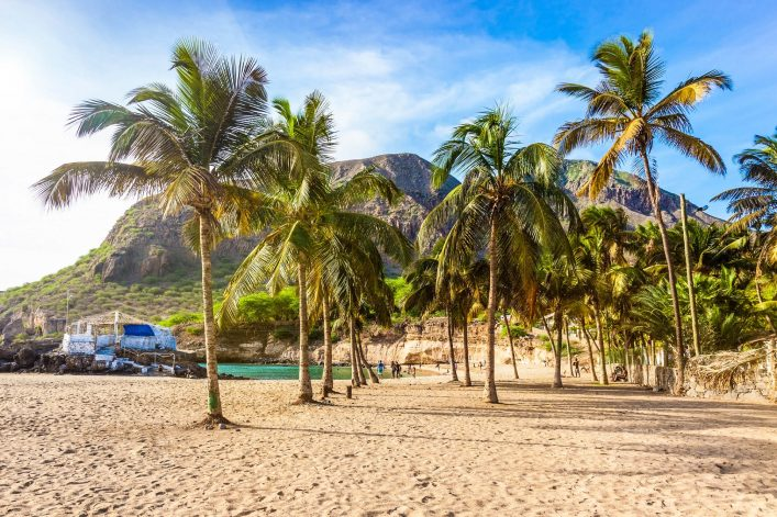 Coconut trees in Tarrafal beach in Santiago island in Cape Verde