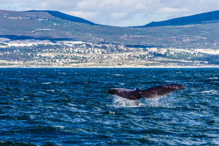 """Whale watching in Hermanus, South Africa"""