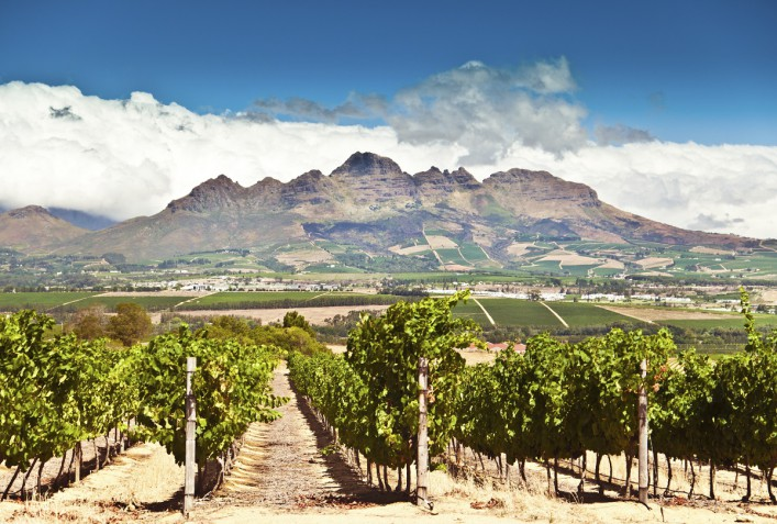 Stellenbosch vineyards iStock_000019397934_Large
