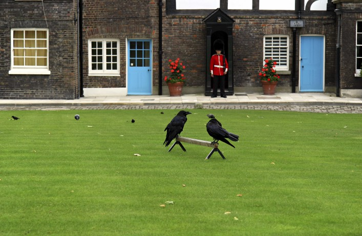 Tower of London und Ravens iStock_000000798156_Large_1920