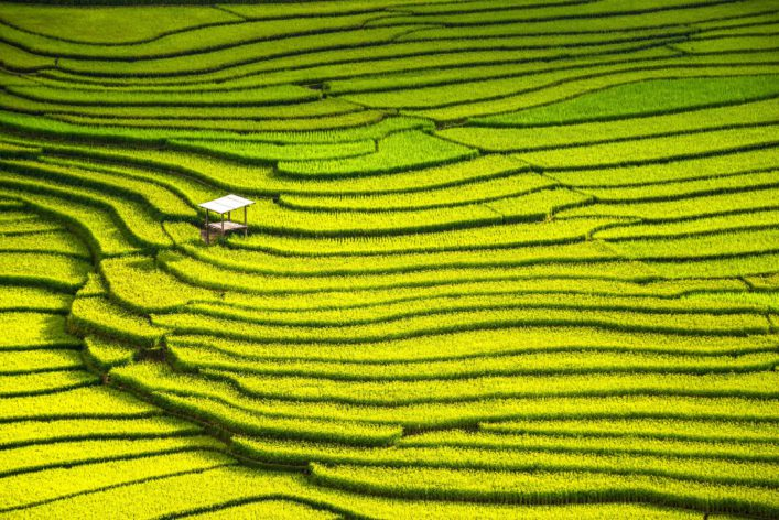beautiful landscape view of rice terraces and house