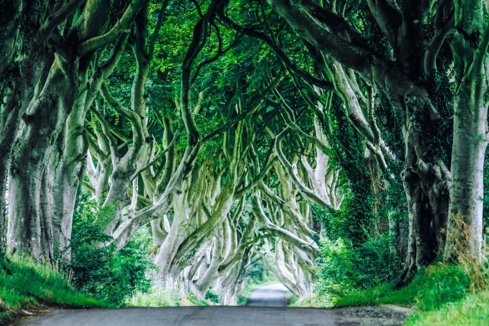 Nordirland Drehorte Game of Thrones Dark Hedges
