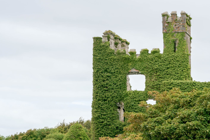 Ruins of Menlo Castle Covered by Creeper, Ireland