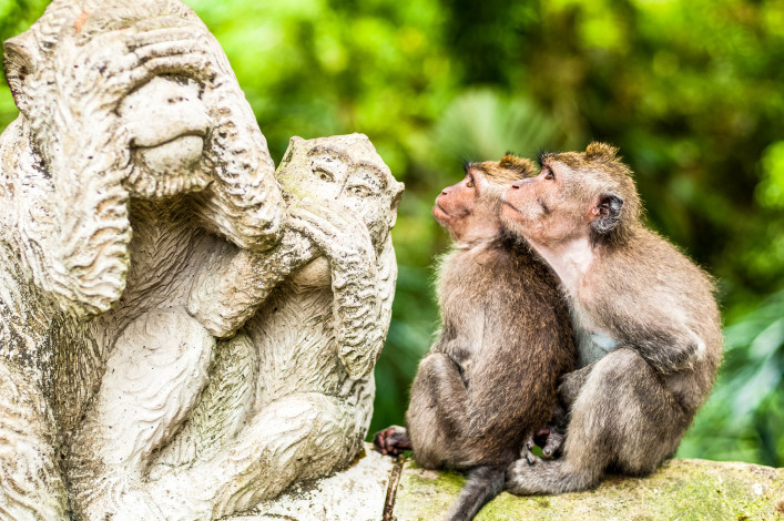 Two long-tailed macaques looking at a statue