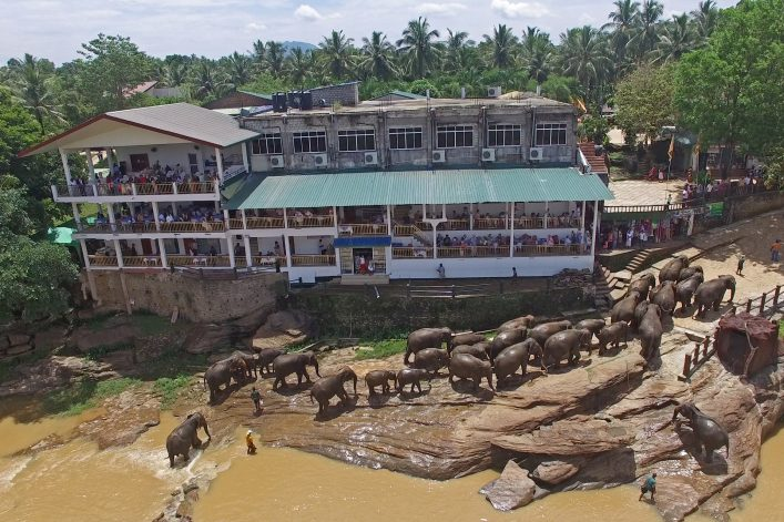 Pinnawala Elephant bath