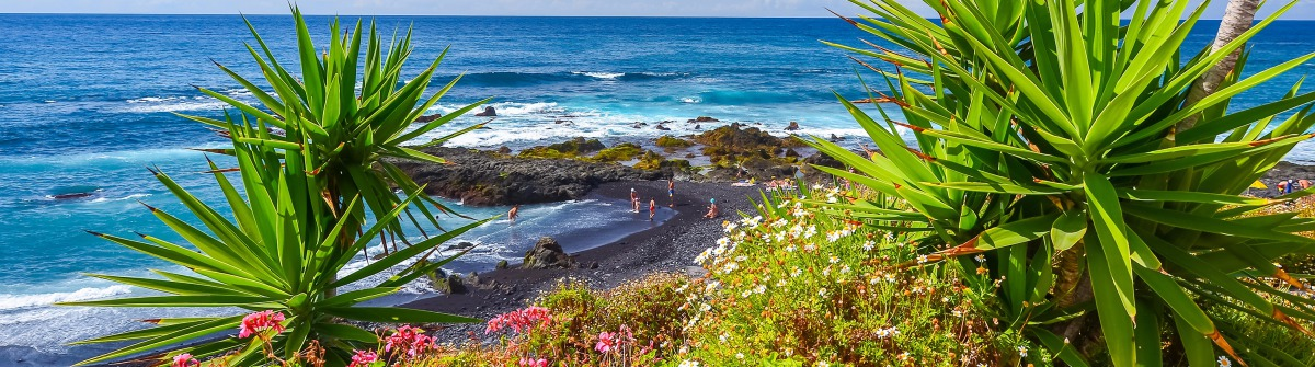 Green tropical plants on beach in Puerto de la Cruz, Tenerife, Canary Islands, Spain_shutterstock_241485676