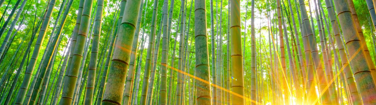 Marchenhafter Bamboo Forest In Japan Urlaubsguru De