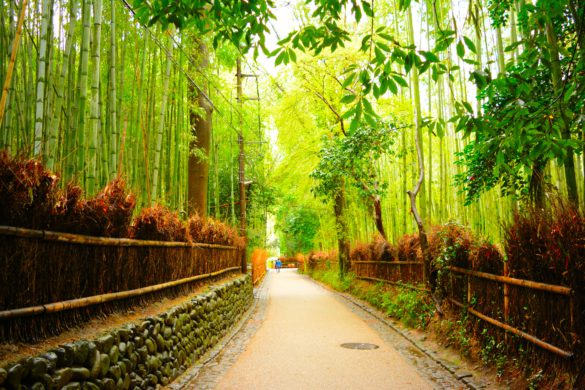 Bamboo Forest Japan Bambuswald