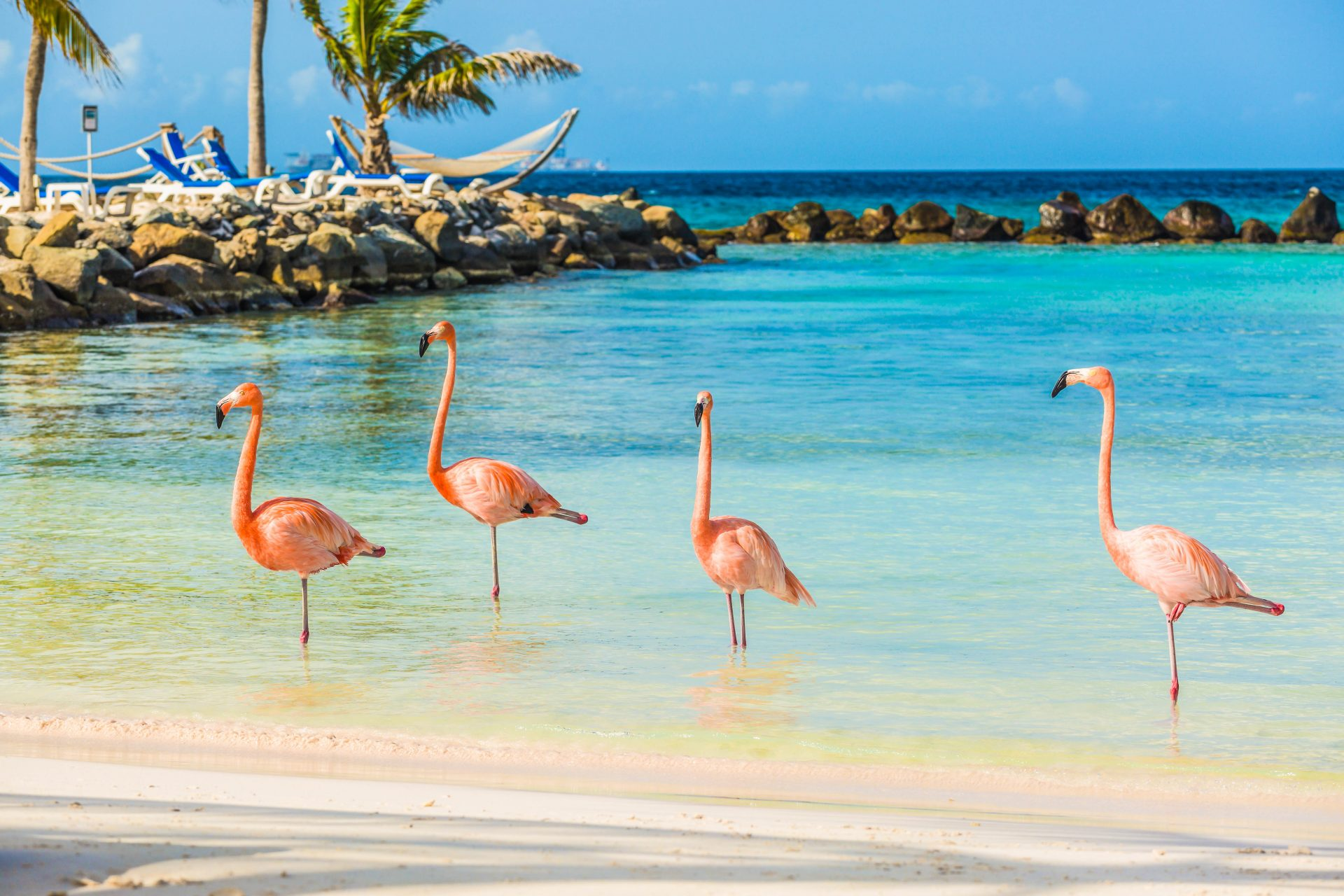 Flamingos in Aruba auf Aruba