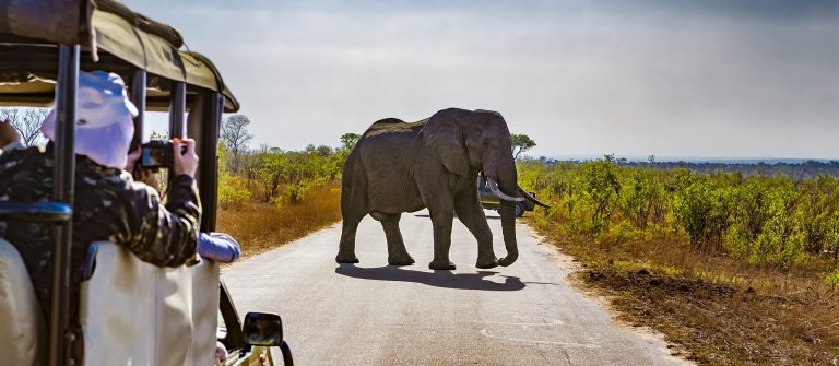 South Africa. Safari in Kruger National Park shutterstock_557534059