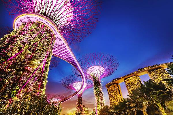 Die Singapur Bäume im Gardens by the bay