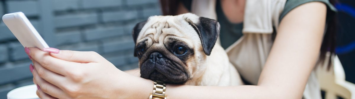 Adorable pug dog sitting in his owner's lap in cafe bar. Selective focus on dog shutterstock_618110183