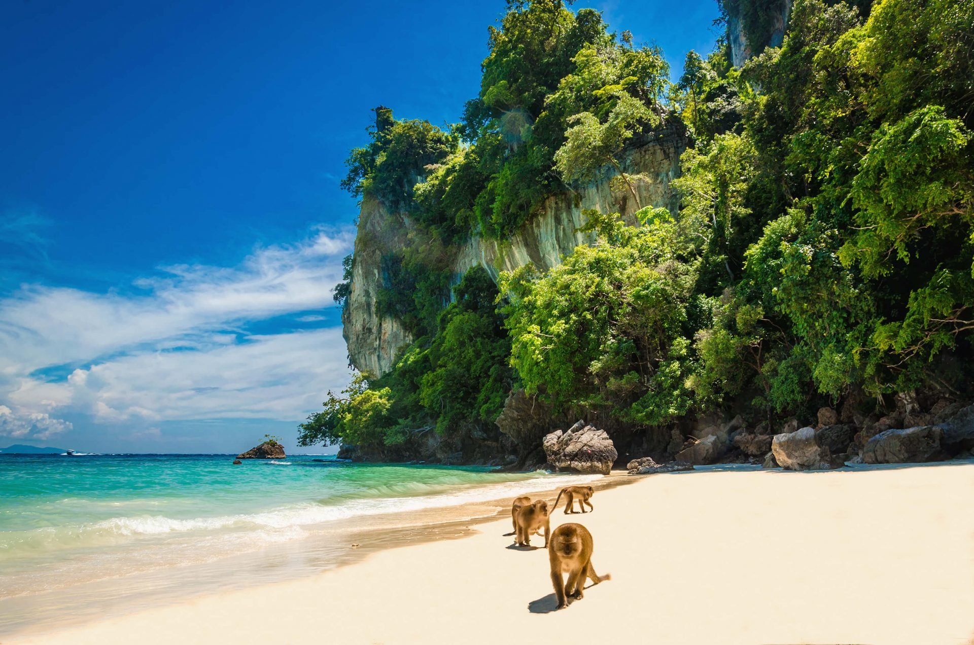 Affen am Monkey Beach in Thailand