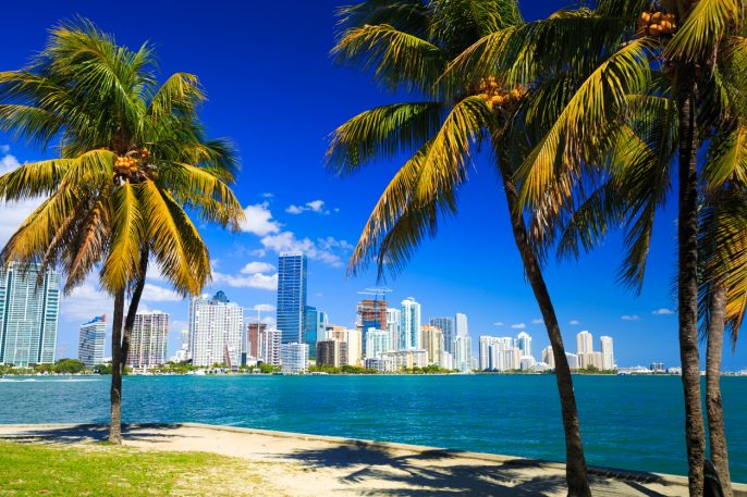 Palm trees and skyline of Miami