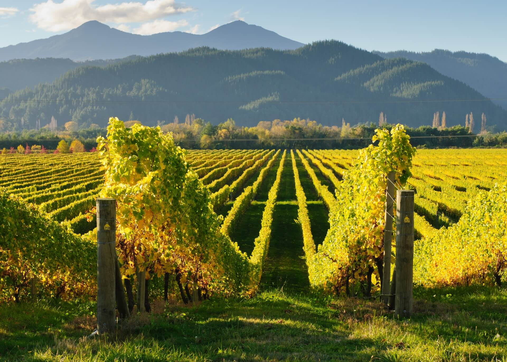Weinberge in Marlborough, Neuseeland