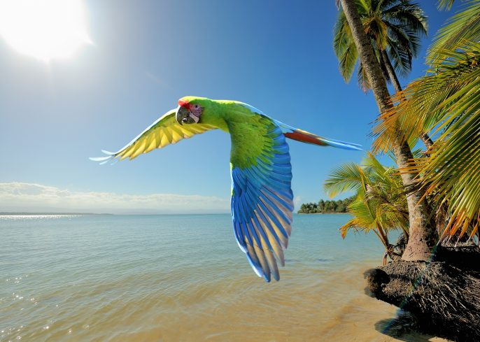 great green macaw at the beach in costa rica