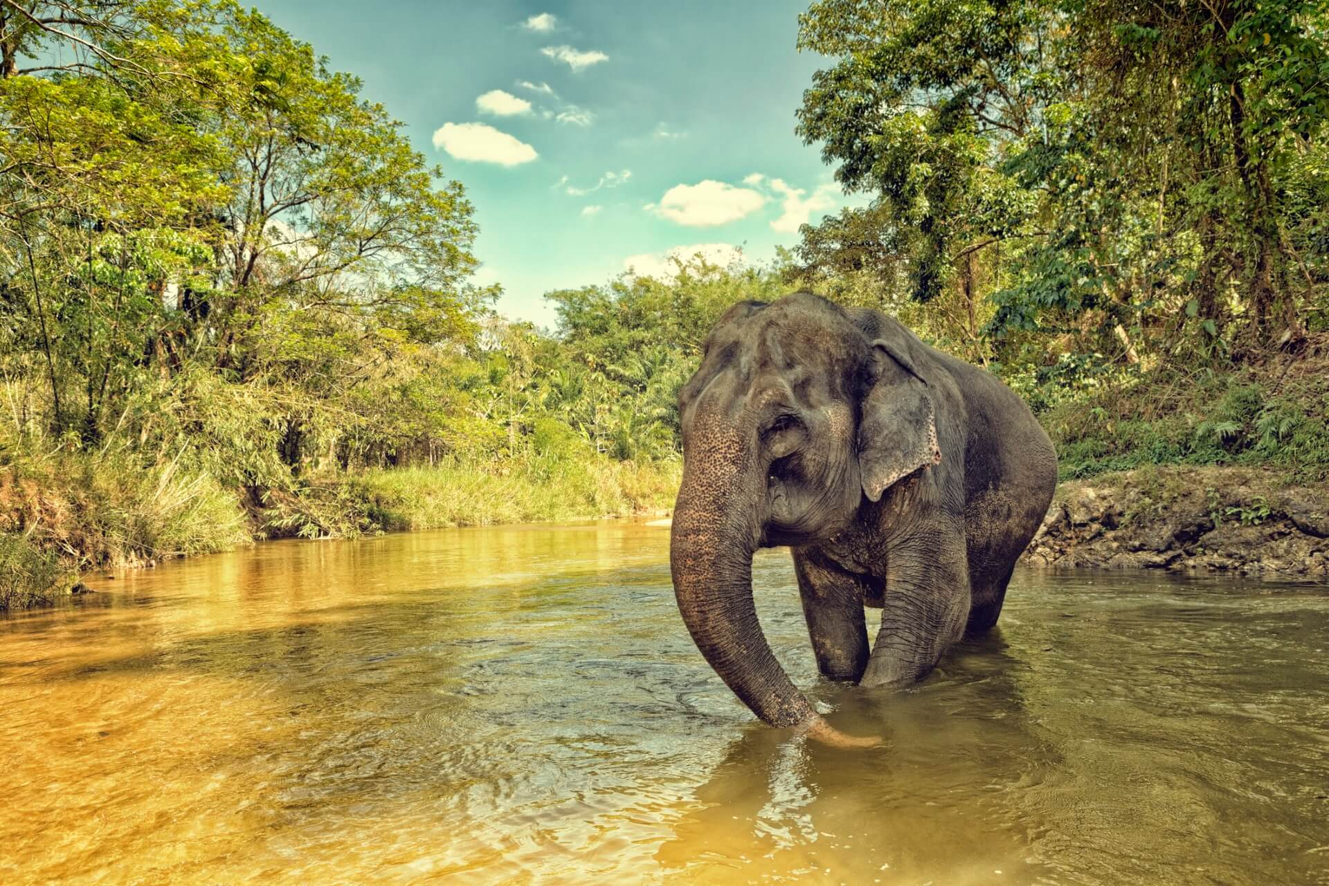 Elefant in Thailand