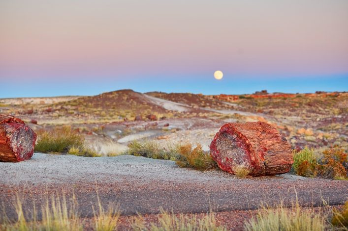 Petrified logs in the Painted desert and Petrified forest national park with full moon, Arizona, USA shutterstock_541393639