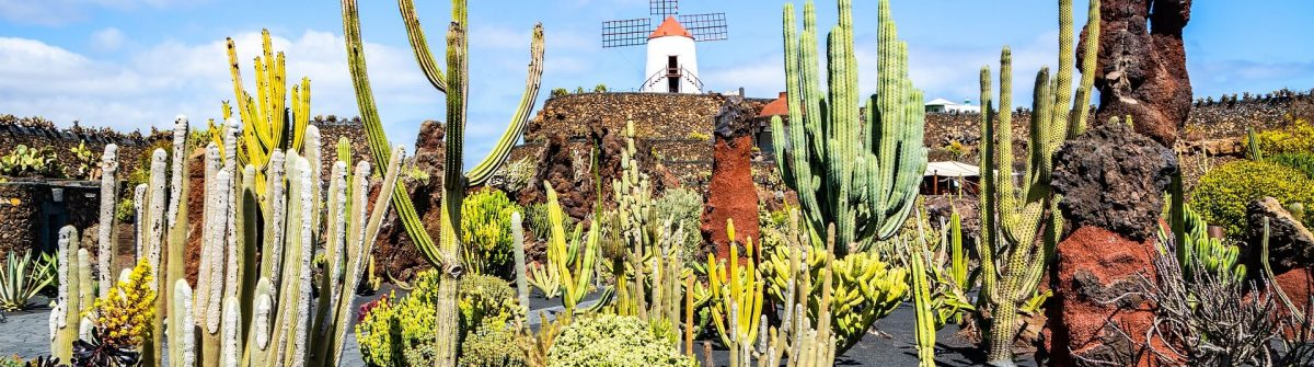 Amazing-view-of-tropical-cactus-garden-in-Guatiza-village-Lanzarote-Canary-Islands-Spain-shutterstock_1433425574