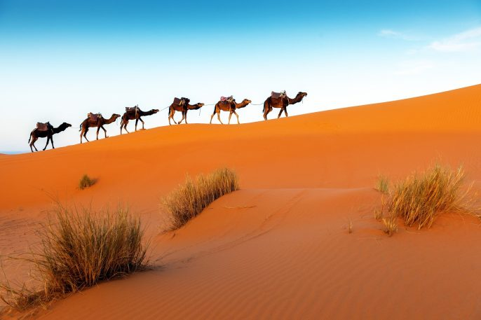 UG_Camels-in-a-series-of-walk-up-Erg-Chebbi-Morocco-iStock-618437652