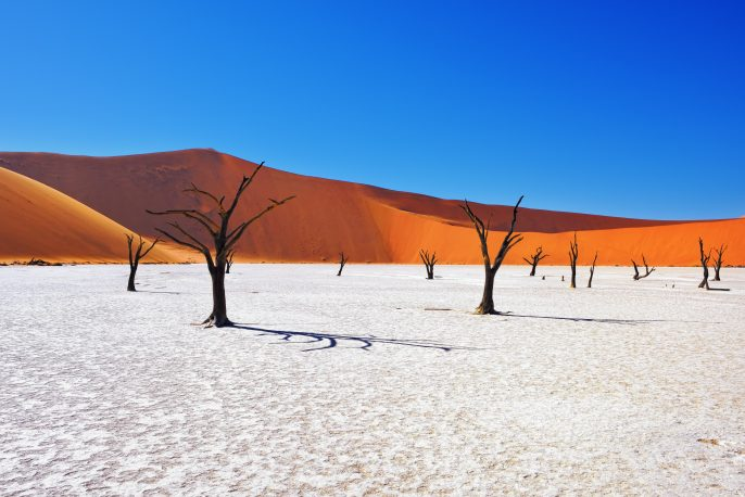 deadTrees_namibia_shutterstock_448819990-Copy