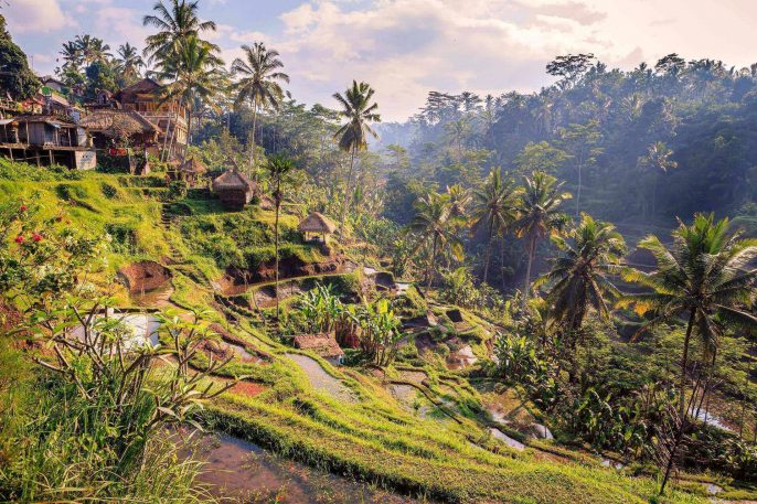 Spectacular-rice-fields-in-the-jungle-and-the-mountain-near-Ubud-in-Bali-shutterstock_316997570-2