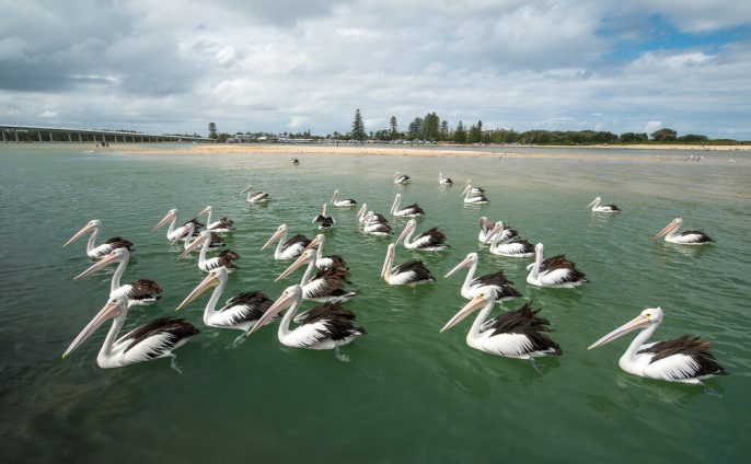 Lakes-Entrance_shutterstock_679431238-1