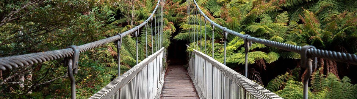 Tarra Bulga Nationalpark in Victoria, Australien